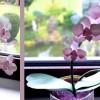 Orchidee aus Cardstock